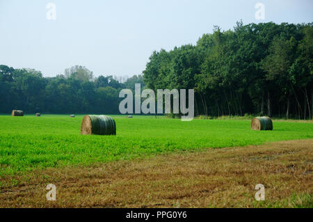 Scenic Hay field with rolled bails of hay. - Stock Image