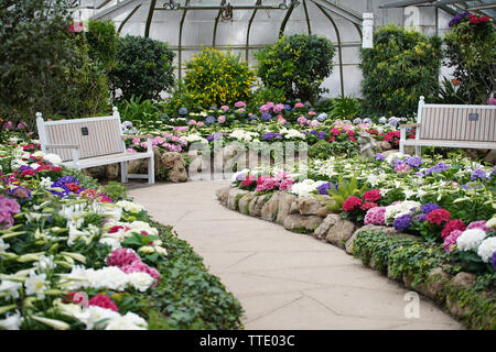 flowers and plants inside a conservatory - Stock Image