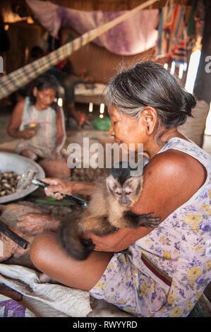 Piaraçu village (Aldeia Piaraçu), Mato Grosso State, Brazil. A Kayapo woman breaks open cumaru (Dipterix odorata, Tonka beans) nuts with a hammer and  - Stock Image
