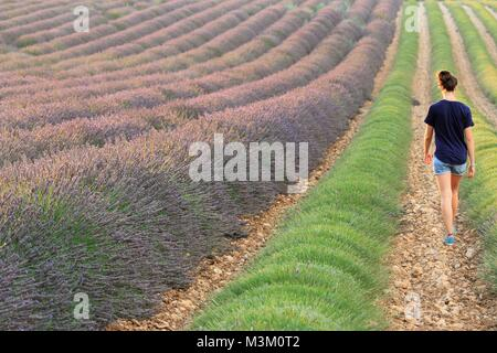 Young woman walking in lavander fields, Valensole, Provence, France - Stock Image