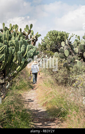 A woman walks down a trail at the El Charco del Ingenio botanical garden in San Miguel de Allende, Mexico. - Stock Image
