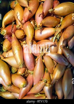 A supermarket display of shallots - Stock Image