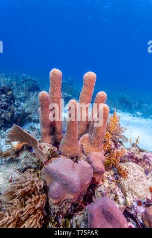 Coral reef with pillar off the coast of Ratan Honduras - Stock Image