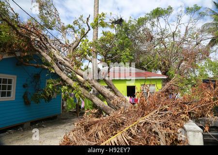 Toppled tree leaning on house after Hurricane Matthew, Nassau, Bahamas - Stock Image