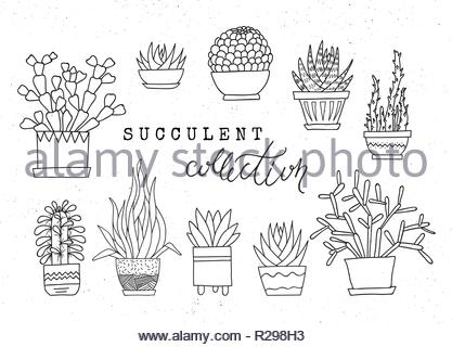 Decorative potted succulents. Vector set of hand-drawn sketched elements isolated on white background. Can be used as a print on t-shirts, bags, stati - Stock Image
