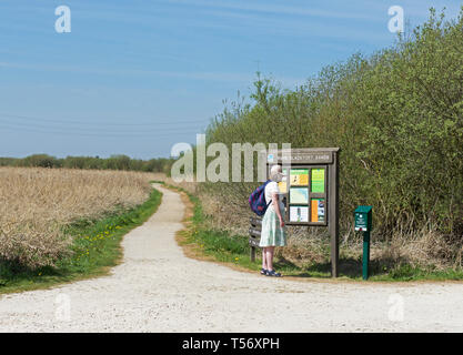 Woman looking at an information panel at Blacktoft Sands, an RSPB nature reserve, East Yorkshire, England UK - Stock Image
