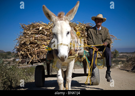 A farmer carries fodder in a carriage pulled by his donkey in Mineral de Pozos, San Luis de la Paz, Mexico - Stock Image