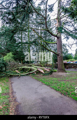 Northampton. U.K. 15th March 2019. Gale force winds overnight bring down some heavy branches from trees in Abington Park.   Credit: Keith J Smith./Alamy Live News - Stock Image