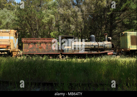 State Saw Mills steam engine SSM No. 2, with tender, slowly rusting away in a rail museum in Pemberton, Western Australia. - Stock Image