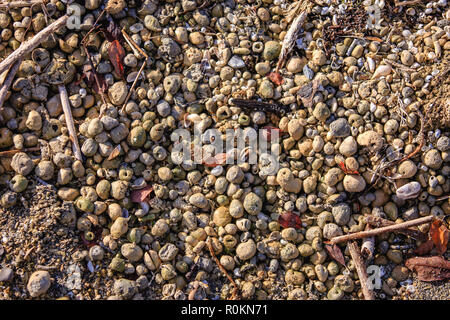Gravel washed up on the beach around the Lough Ennell, Mullingar, Ireland - Stock Image