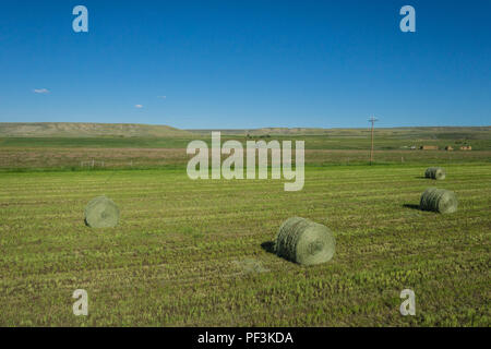 Green hay bales lay on a field of a farm in Wyoming. - Stock Image