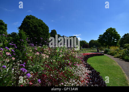 Flower beds in Hyde Park - Stock Image