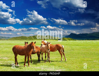 Mountain landscape with grazing horses - Stock Image