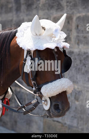 Lace bonnet for tourist attraction horse rides in Palermo, Sicily, Italy - Stock Image