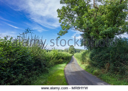 Leafy country lane in summer with hedgerows beside the road; Powys, Wales, UK - Stock Image