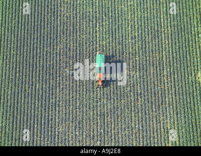 Aerial view of a red tractor with a green trailer harvesting vegetables in a field - Stock Image