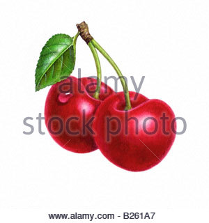 Cherries A - Stock Image