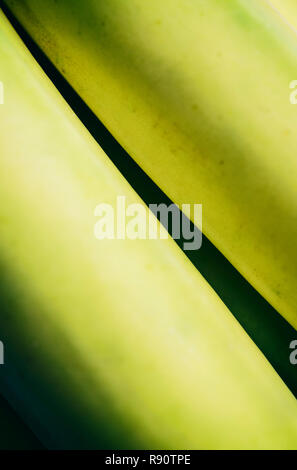 Close-up of a bunch of bananas - Stock Image