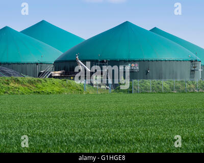 Biogas power plant, near Celle, Lower Saxony, Germany - Stock Image