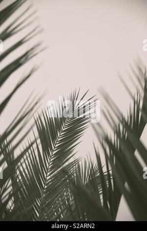 Green fern or palm tree leaves framing the image with copy space - Stock Image