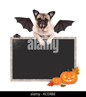 Halloween bat pug dog with paws on blank blackboard sign, with pumpkins, isolated on white background - Stock Image