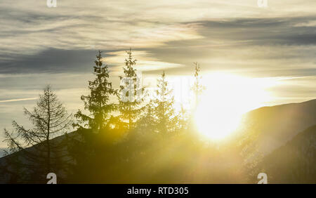 Sunset over the forest. Beautiful yellow and orange flares as the sun sets behind the mountains. Coniferous forest of firs and larches in silhouette. - Stock Image
