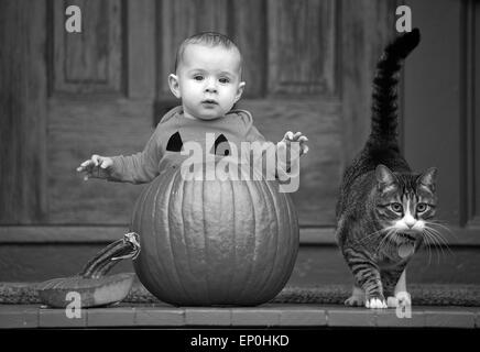 Baby in a pumpkin with cat - Stock Image