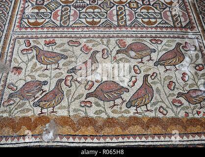 6386.Mosaic floor depicting birds, Hirbet Madras byzantine church, Israel hillcountry area south of Jerusalem. - Stock Image