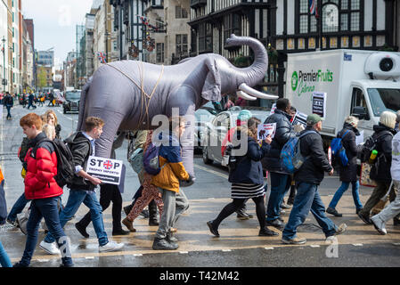 Protesters carry an inflatable elephant through streets of london at a stop trophy hunting and ivory trade protest rally, London, UK. Crossing the road - Stock Image