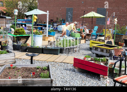 ASHEVILLE, NC, USA-4/11/19:  Four senior citizens plan and work on a community garden between Page Ave. and Haywood Street in downtown. - Stock Image