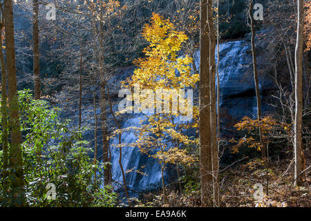 Tree with yellow leaves by Rainbow Falls in Nantahala National Forest near Gorges State Park near Cashiers, North - Stock Image
