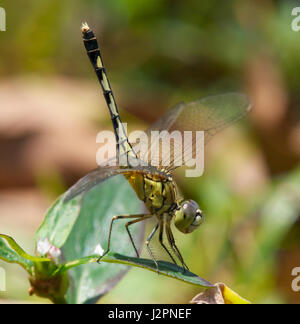 Dragonfly - Stock Image