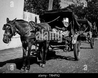 Horse drawn taxis, Sao Paulo, Brasil1985. Resting and waiting for customers - Stock Image