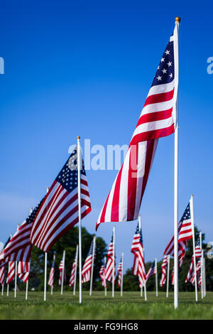 American flags of the United States in a field. The red, white, and blue American flag is also called the Stars - Stock Image