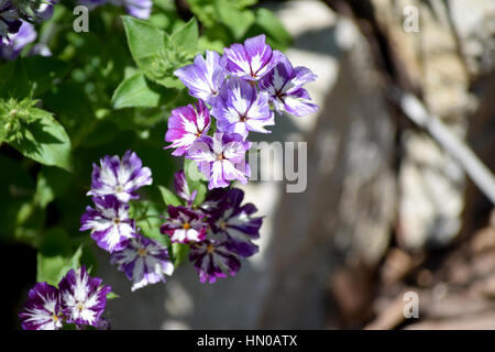 small bunch of purple flowers - Stock Image
