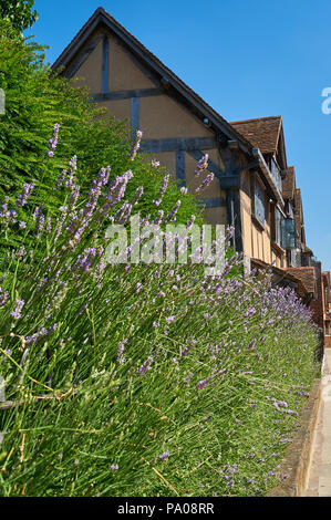 Stratford upon Avon and William Shakespeare's birthplace on Henley Street on a summer afternoon. - Stock Image