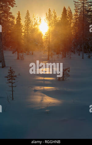 Winter landscape in direct light, shining through trees in a forest and fog and mist rising, Gällivare, Swedish Lapland, Sweden - Stock Image