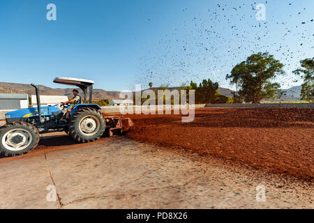 A farmer uses a tractor to spread piles of fermenting rooibos tea across  large drying courts on a farm in the Cederberg mountains in South Africa. - Stock Image