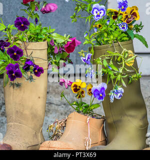 Old boots Used As Flower Pots Honningsvag, Norway - Stock Image