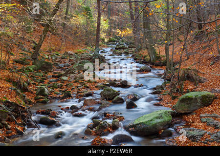 Stream, Forest, Autumn, Waterfall, Cascade, Use, Ilsetal, River, National Park, Harz - Stock Image