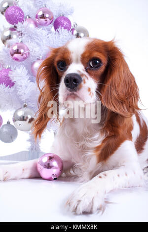 Dog with christmas tree. animal pet cute christmas photo. Studio photo with cute puppy dog near the christmas tree. - Stock Image