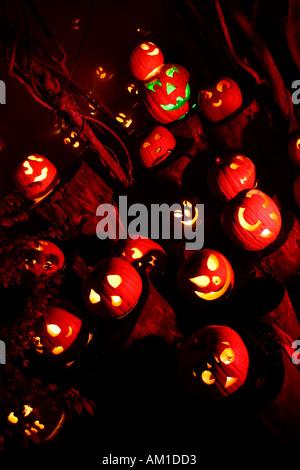 Jack O Lanterns at Halloween Spectacular Providence Zoo Providence Rhode Island - Stock Image