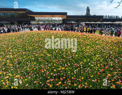 Keukenhof Flower Gardens new entrance building with crowds of visitors and colorful tulips Mixed tulip bed in spring near Amsterdam - Stock Image