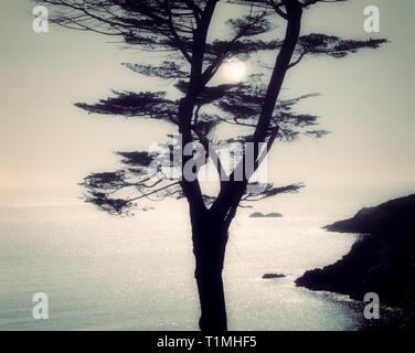 PHOTOGRAPHIC ART: Combe Point near Dartmouth, Devon, Great Britain - Stock Image