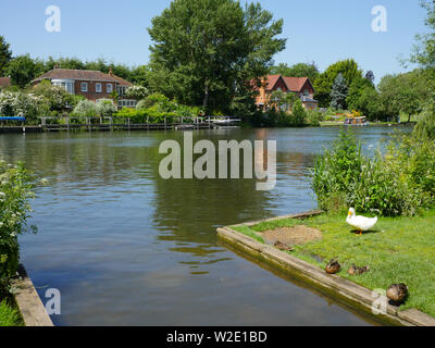 River Thames Landscape, at Ferry Lane, on The Ridgeway Path, South Stoke, Oxfordshire, England, UK, GB. - Stock Image