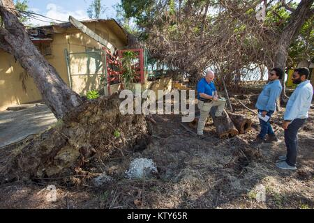 FEMA employees assess a damaged tree in the aftermath of Hurricane Maria December 20, 2017 in Guanica Beach, Puerto - Stock Image