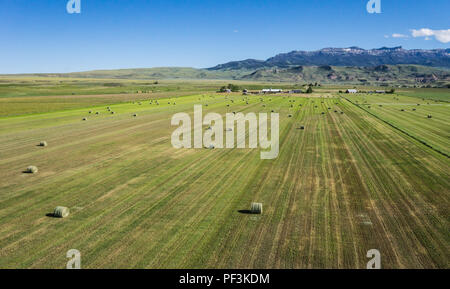 Green field of cut hay in the American west below the Rocky Mountains. - Stock Image