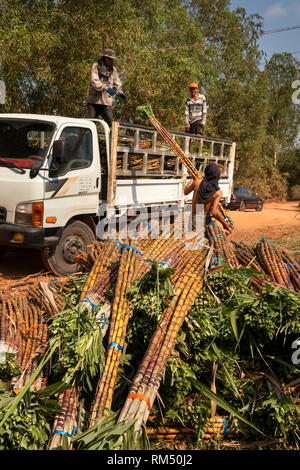 Cambodia, Tuek Chhou, agriculture, man loading truck with cut sugarcane - Stock Image