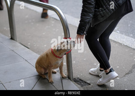 A  woman​ pats a small dog tied up outside a supermarket - Stock Image