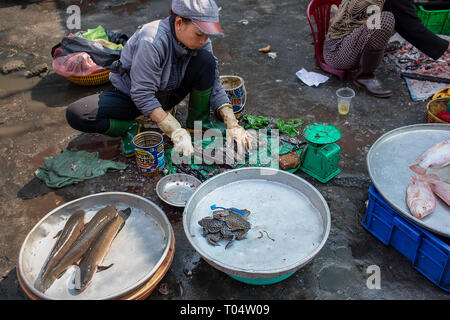 Vietnamese woman prepares live frogs for sale on a concrete floor of a Ho Chi Minh City street market, Vietnam. - Stock Image
